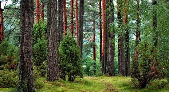 Grey Range Wood Veneer Laminates